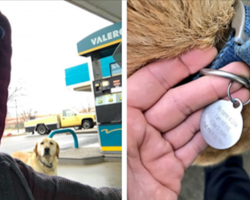 People Are Pretty Obsessed With This Dog Who Goes On His Own Adventures