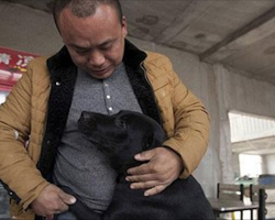 Millionaire loses his beloved dog, rescues over 2000 stray dogs in his honor
