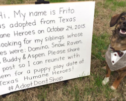 Dog dresses up and takes to Facebook in search for adopted siblings