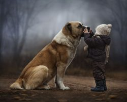 Mother's intimate photographs capture her sons' special bond with dogs, ducks and rabbits
