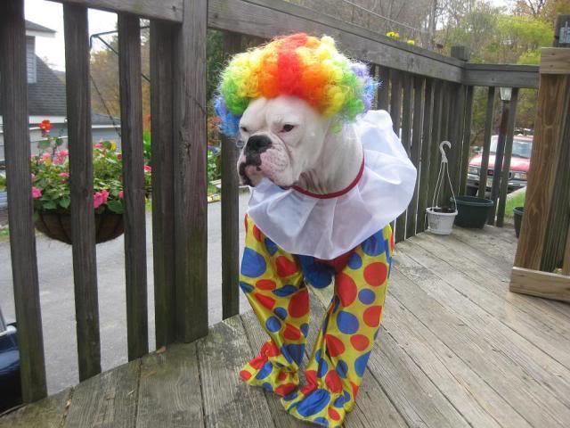 boxer clown halloween costume