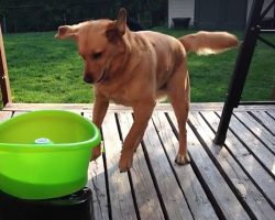 Buddy The Rescue Dog Goes Bonkers Over Self-Tossing Fetch Toy