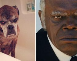 10+ Hilarious Times Dogs Tried To Be Human
