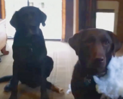 [Video] Dad asks who made the mess — now watch Charlie rat out his sister