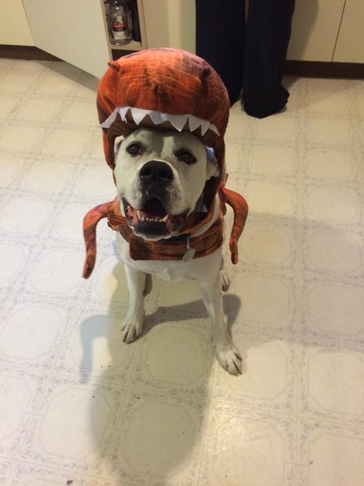 dinosaurs-boxer-dog-costume & 12 Costumes That Prove Why Boxer Dogs Always Win At Halloween