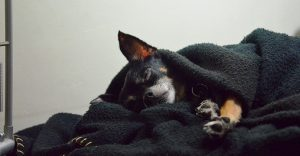 dog-sleeping-under-the-covers