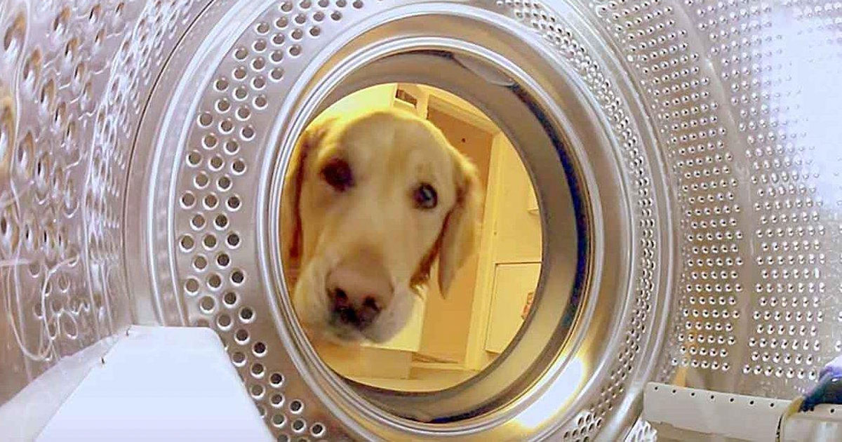 dog_rescues_teddy_bear_from_washer_featured