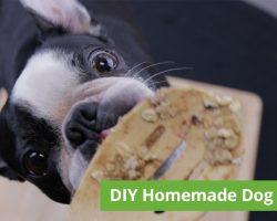 Easy DIY Homemade Five-Ingredient Dog Treats
