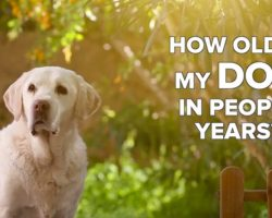 """How Old Is My Dog in People Years? Hint: You Don't Just """"Multiply by 7"""""""
