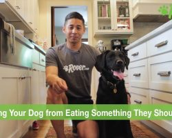 How To Prevent Your Dog from Eating Something They Shouldn't