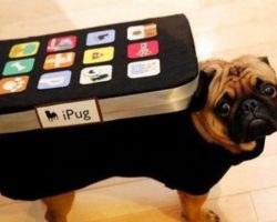 The Best Apps for Dog Parents