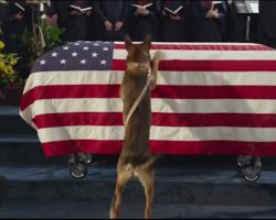 A Marine Died In Battle, But What His Dog Did After The Funeral? I'm Speechless!