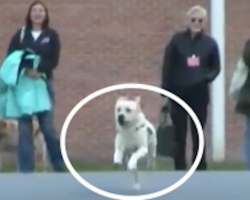 [Video] How One Service Dog Helped an Injured Veteran and an Incarcerated Woman