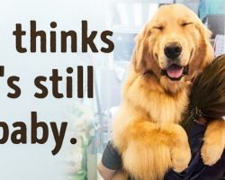 15 Adorable Dogs Who Have No Clue How Huge They Are