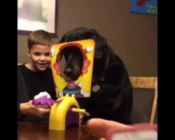 "Rottweiler Can't Wait For His Turn To Play ""Pie Face!"" On Family Game Night!"