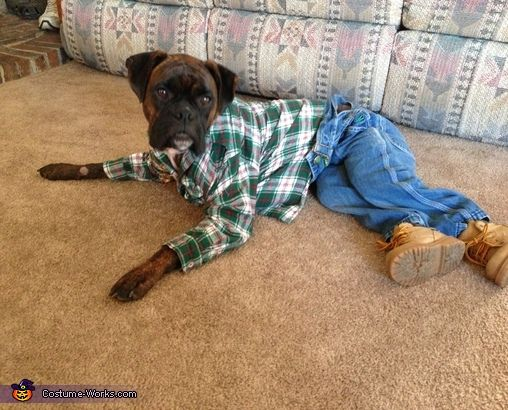 stylish-boxer-dog & 12 Costumes That Prove Why Boxer Dogs Always Win At Halloween