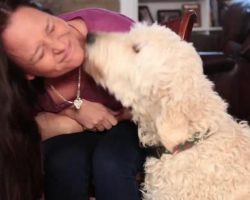 Why Does My Dog… Lick Me? Hint: It's NOT Simply To Show Affection