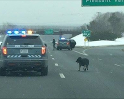 Stray dog walks onto freeway. Cops close down highway and rescue the dog
