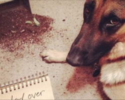 12 Shamed German Shepherds Who Are Sorry (But Not Really)
