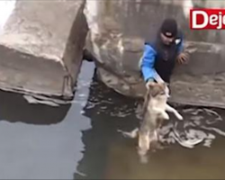 [Video] Man rescues a drowning dog, dog thanks him in the most precious way