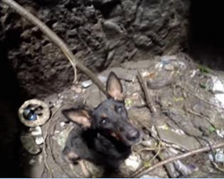 [Video] Dog Sobs When She Sees Rescuer Coming To Save Her From Deep Well