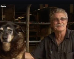 Maggie the Kelpie, Potentially The World's Oldest Dog To Ever Live, Dies At Age 30