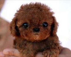 These 26 Tiny Puppies Are The Most Adorable Dogs You'll Ever See