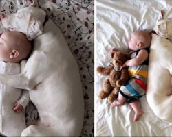Traumatized dog is terrified of humans except for this baby, so Mom grabs her camera