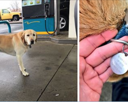 Man Finds Lost Dog At Gas Station, Then Flips Over Name Tag To See There's No Number