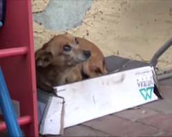 This dog waited on a shoebox for months hoping to be rescued—and then they arrived