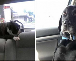 These 32 pets had no idea they were going to the vet. Their reactions are absolutely priceless