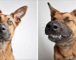 Shelter Puts Rescue Dogs In A Photo Booth To Get Them Adopted. The Results Speak For Themselves!