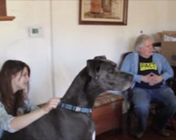 Soldier Reunited With The Great Dane His Wife Gave Away