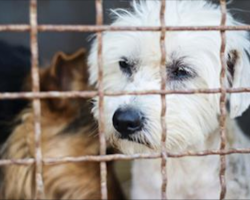 San Francisco passes law making all pet shops only sell rescue dogs and cats