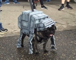 Behold: A Star Wars Pug Parade Might Be The Most Amazing Parade Ever