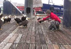 Fisherman Is Feeding A Huge Flock Of Bald Eagles, Then The Camera Pans Left…