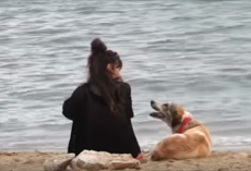 Woman approaches stray on the beach and lures her into her car — what follows is incredible