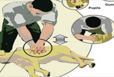 CPR for Dogs: Do You Know What To Do If Your Dog Stops Breathing?