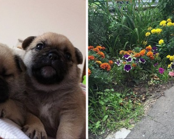 What Happens When You Cross A Pug With Other Dog Breeds