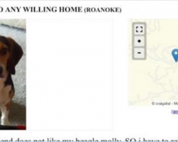 Man Posts This Ad On Craigslist After His Girlfriend Insists He Get Rid Of His Dog