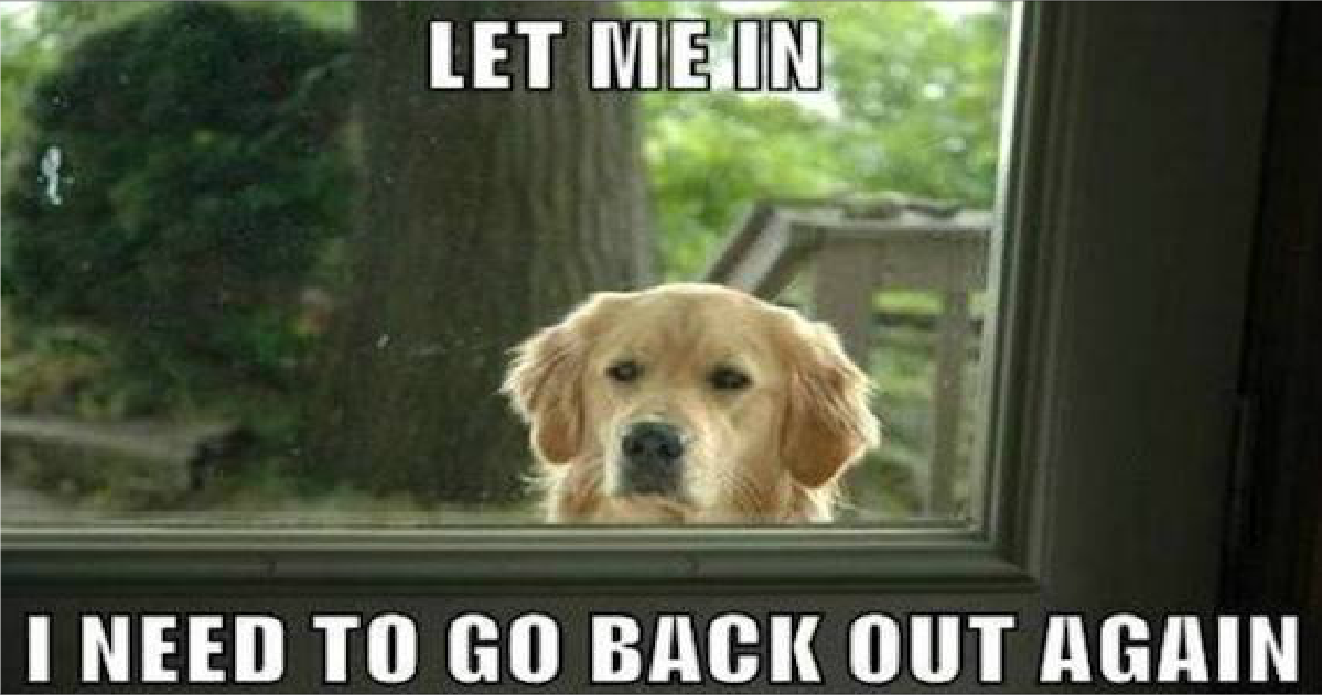 Funny Animal Memes For Adults : Funny animal memes to make you laugh till you drop