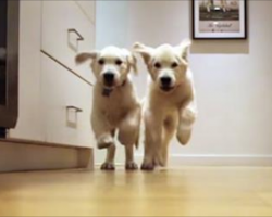Puppies Grow Up Over 9 Months In Adorable Dinner Dash Timelapse