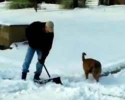 Man's trying to shovel snow. Now watch his dog hilariously try to help him