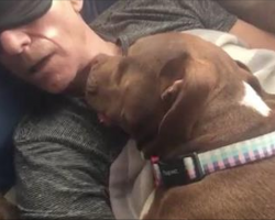 The Love Story Continues Between Patrick Stewart And His Foster Dog