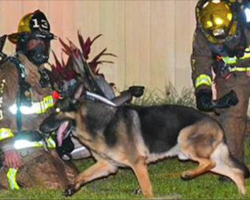Mom screams for kids outside burning home. That's when dog races inside with firefighters