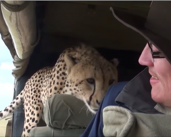 Unsuspecting tourist turns around to see a surprise co-pilot has joined him on safari