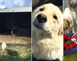 Mama Dog Is Depressed When 7 Puppies Die In Barn Fire. Then They Show Her A Litter Of Orphans