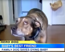 This rescue dog knew something was wrong with the baby and alerted the family to save the day.