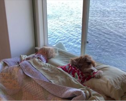 Boy and dog wake up together every morning, have an adorable routine that will melt your heart