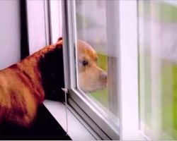 After Watching this Video I Will Never Look at Dogs the same Way Again